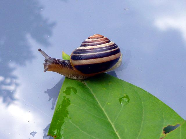 Snail, Leaf, Shell, Animals, Nature, Sky, Mirroring