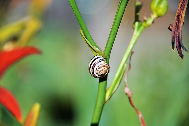 Snail, Shell, Halm, Close, Animals