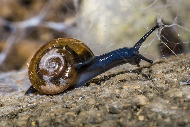 Snail, Animals, Nature, Shell, Mollusk, Copse Snail