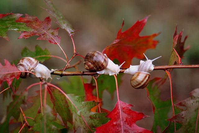 Snails, Leaves, Red, Autumn, Rain, Nature, Shell