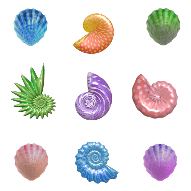 Shell, Seashell, Nautilus, Clam, Barnacles, Mollusk