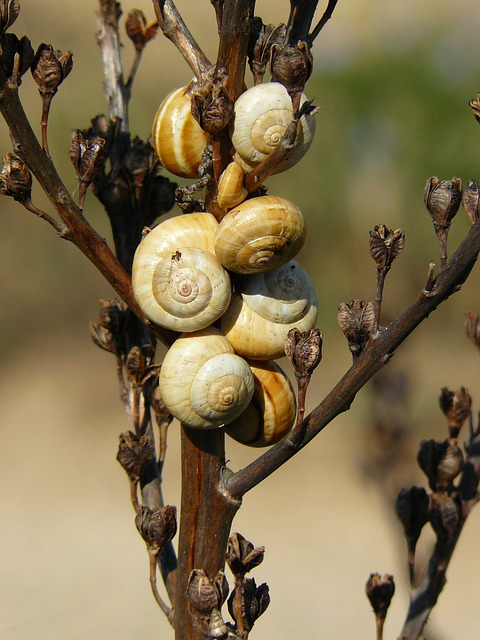 Snails, Shell, Snail, Close, Snail Shell, Mollusk