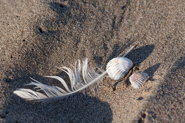 Spring, Shell, Sea, Holiday, Memory, Housing, Animal