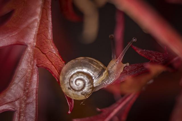 Snail, Macro, Housing, Shell, Close, Nature, Mollusk