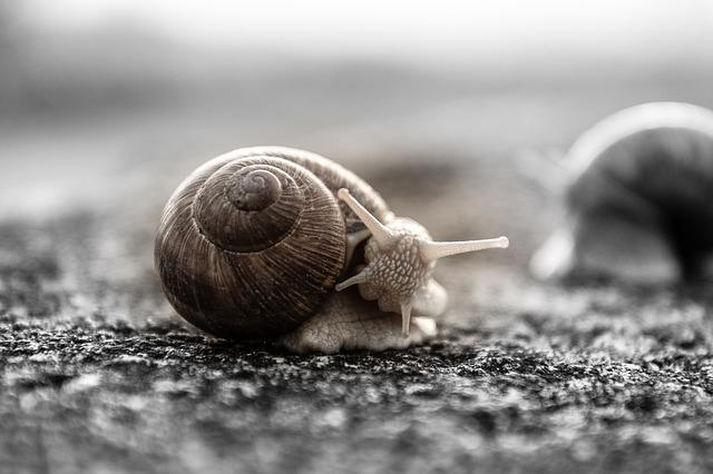 Snail, House Snail, Mollusk, Shell, Crawl, Nature