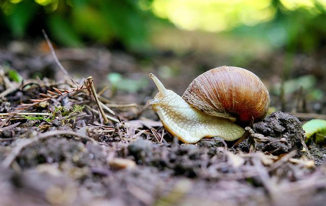 Snail, Mollusk, Shell, Nature