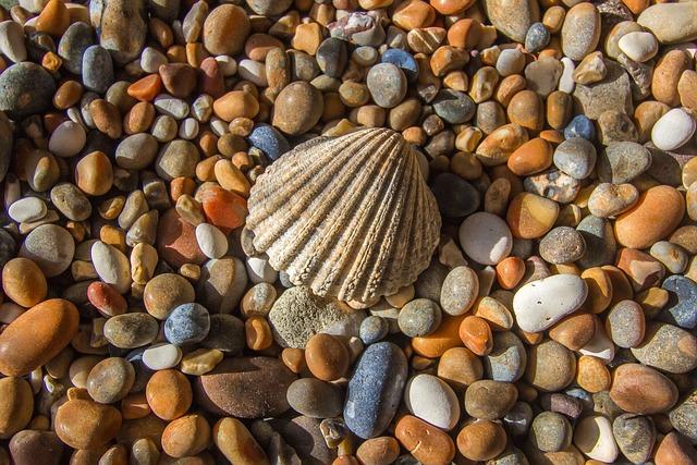 Shell, Ocean, Rhinestones