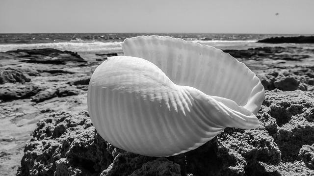 Seashell, Beach, Shell, Sea, Nature, Summer, White