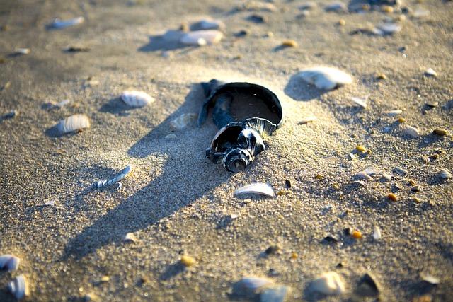 The Atlantic Ocean, Shell, Ocean, Sea, Sand, Wave