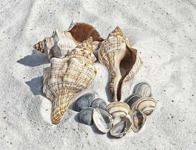 Illustration, Shell, Shells, Beach, Sand, Sea, Shelling