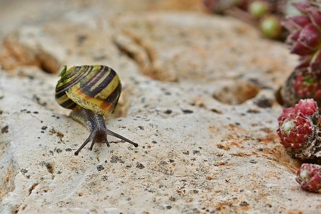 Snail, Garden Tape Worm, Shell, Slowly, Mollusk, Crawl