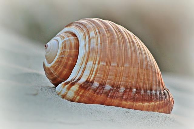 Shell, Beach, Snail Shell, Maritime, Meeresbewohner