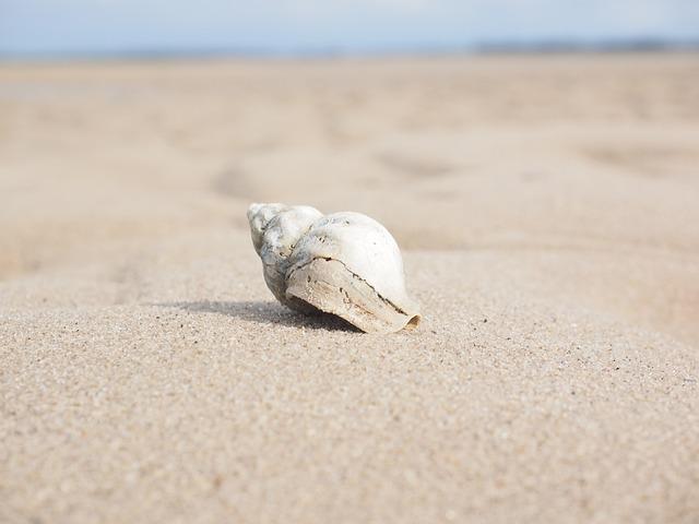 Snail, Whelk, Shell, Buccinum Undatum, Snail Shell