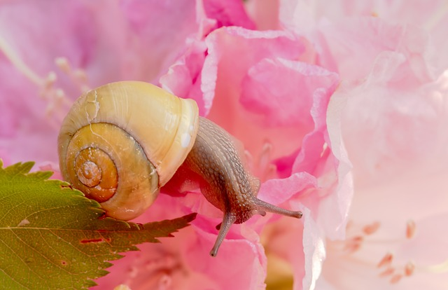 Snail, Shell, Spiral, Molluscs, Reptiles, Snail Shell
