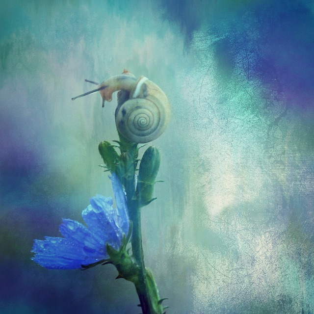 Texture, Background, Snail, Shell, Animal, Nature