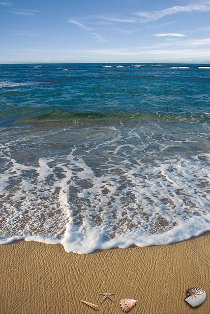 Sea, Vacations, Memory, Casing, Shell, Animal