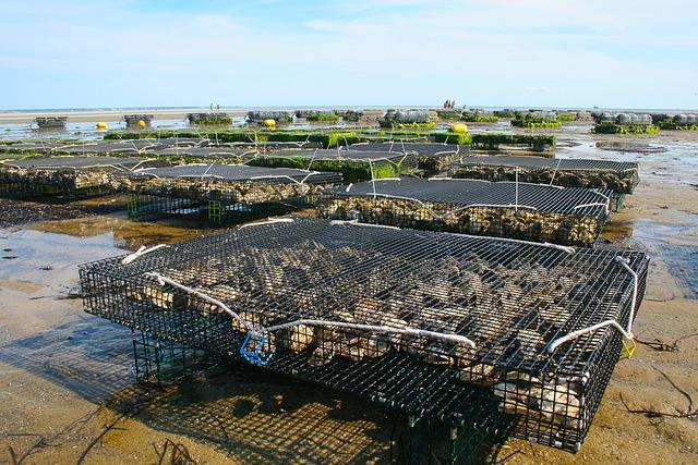 Oyster Farm, Shellfish, Fis, Oyster, Sea, Shell