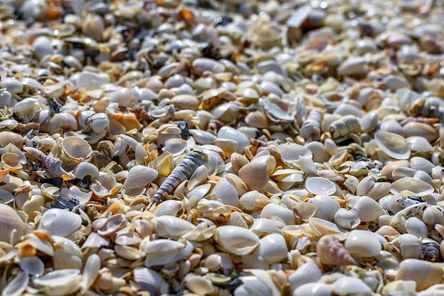 Mussels, Beach, Coast, Bank, Shells, Mollusk, Kattegat