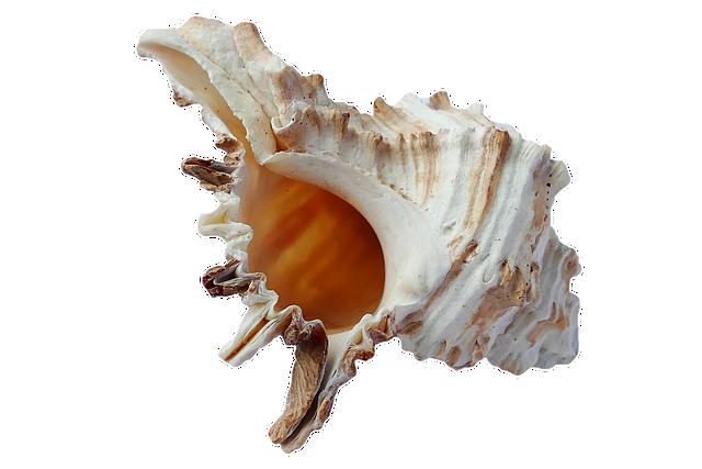 Sea, Shells, Ocean, Beach, Vacation, Sea Shells, Sand
