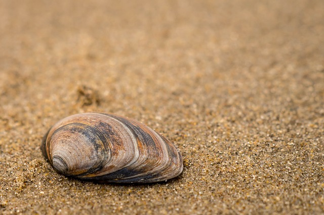 Sand, Coast, Shell, Sieve, Beach, Shells, Shelling