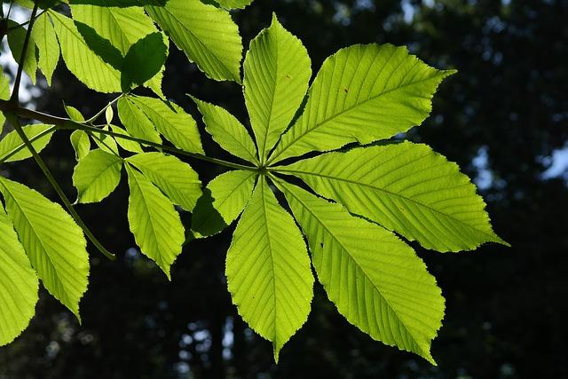 Leaves, Green, Backlighting, Shine Through