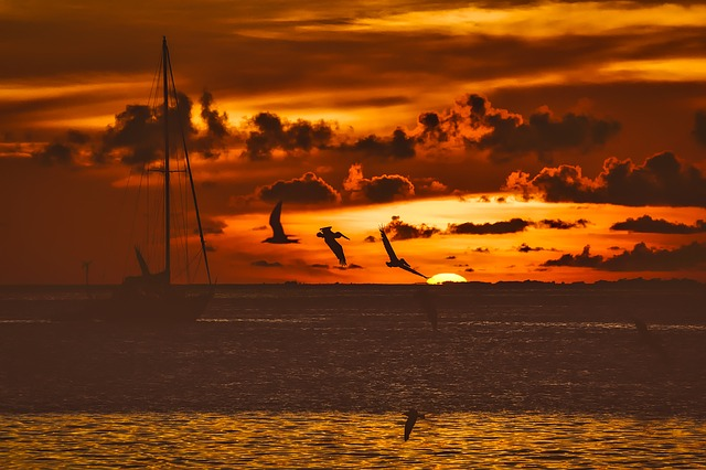 Sunset, Dusk, Fishing Boat, Ship, Birds, Gulls