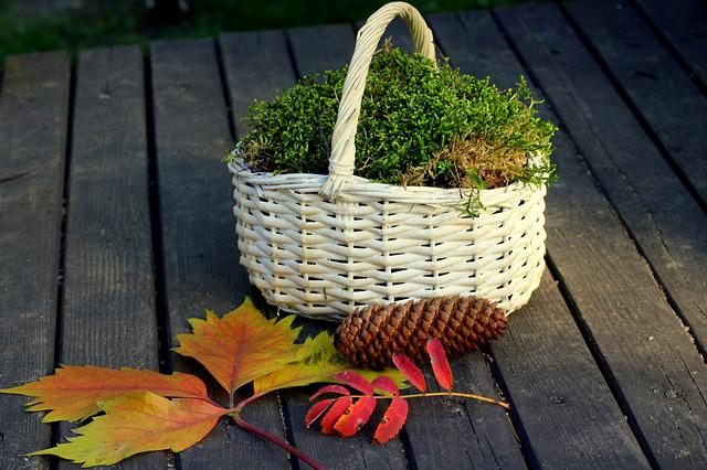 Shopping Cart, Autumn Weather, Moss, Colorful Leaves