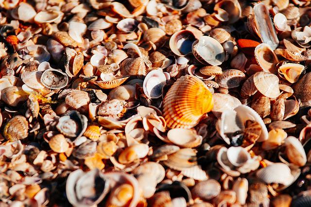 Sea, Beach, Orange, Shore, Pearl, Seashells, Seashell