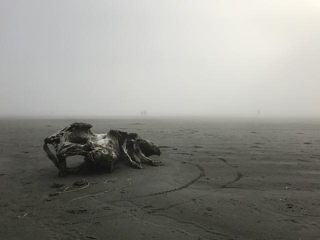 Driftwood, Foggy, Sand, Ocean, Shoreline, Coast, Misty