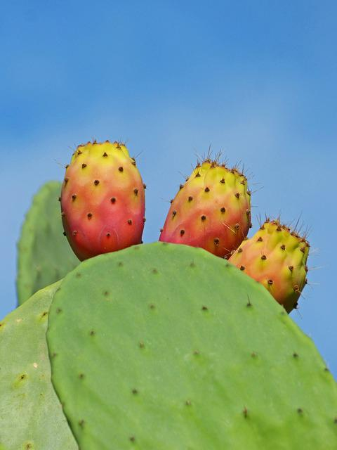Shovels, Prickly Pear Cactus, Prickly Pear