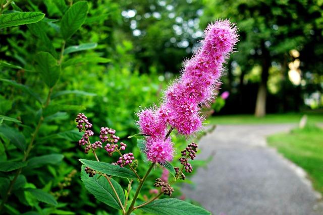 Flower, Pink Flower, Shrub, Foliage, Luscious Foliage