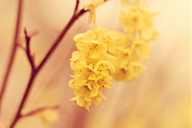 Flower, Shrub, Twig, Branch, Yellow, Spring