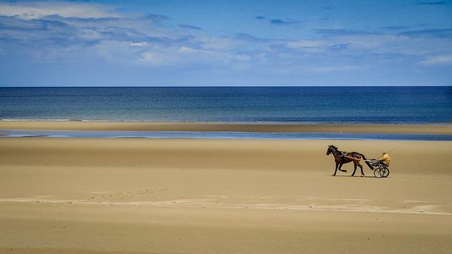 Sand, Beach, Body Of Water, Sea, Side, Trotter, Horses
