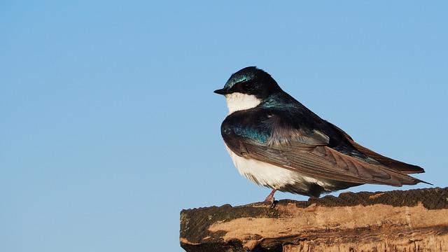 Bird, Blue, Sky, Colorful, Side Profile, Feathers