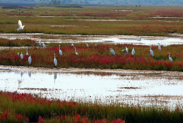 Great White Herons, Scattering, Sedge, Siege, Waterfowl