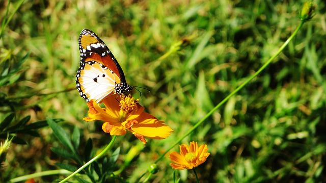 Sierra Leone, Butterfly, Insect, Africa, Flower, Beauty