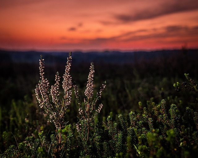 Sunset, Natural, Ro, Sky, Landscape, Silence, Heather