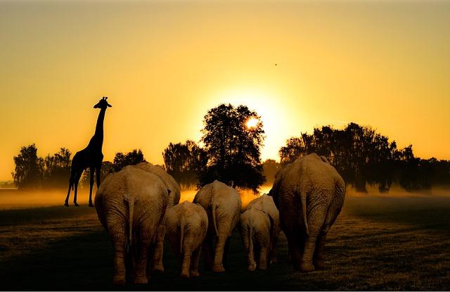 Africa, African, Sunset, Dawn, Silhouette, Mammal