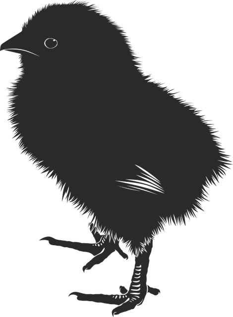 Chick, Animal, Farm, Baby, Silhouette