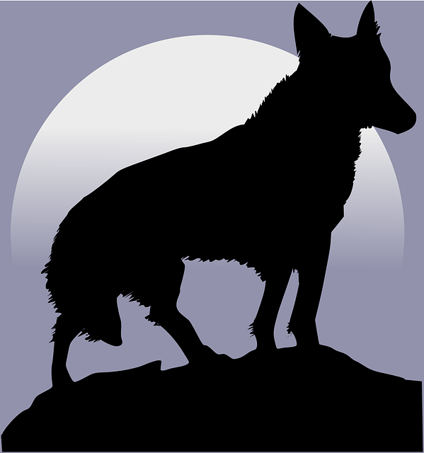 Wolf, Silhouette, Moon, Howl, Howling, Light, Wildlife