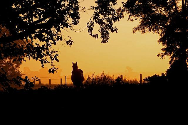 Sunrise, Fog, Horse, Trees, Silhouette, Morgenstimmung