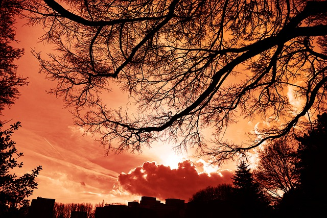 Tree, Skyline, Silhouette, Sunset, Clouds, Red Sky