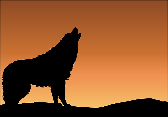 Wolf, Howling, Sunset, Sunrise, Silhouette, Black