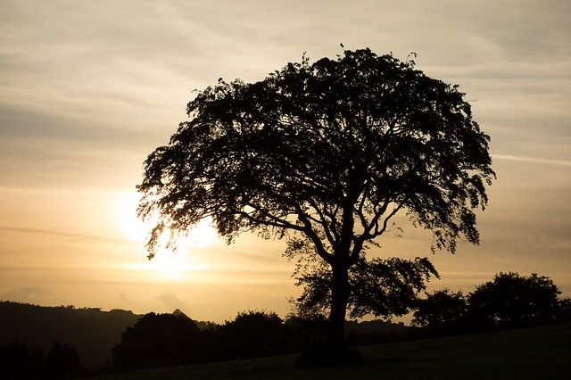 Tree, Sunset, Silhouette, Evening
