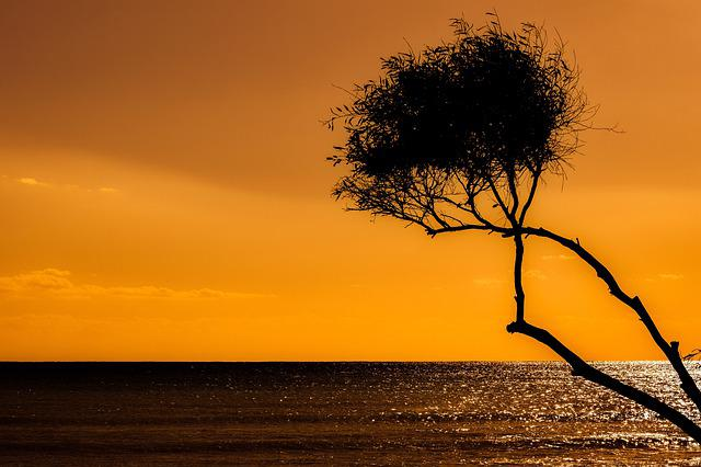 Sunset, Tree, Silhouetted, Silhouette, Dusk, Evening