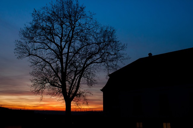 Sunset, Marbach, Tree, Silhouette