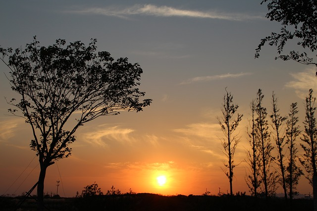 Sunset, Qingdao, Withered, Tree, Silhouette