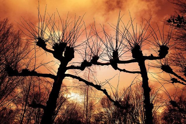 Pollard Willow, Willow, Tree, Silhouette, Bare Tree
