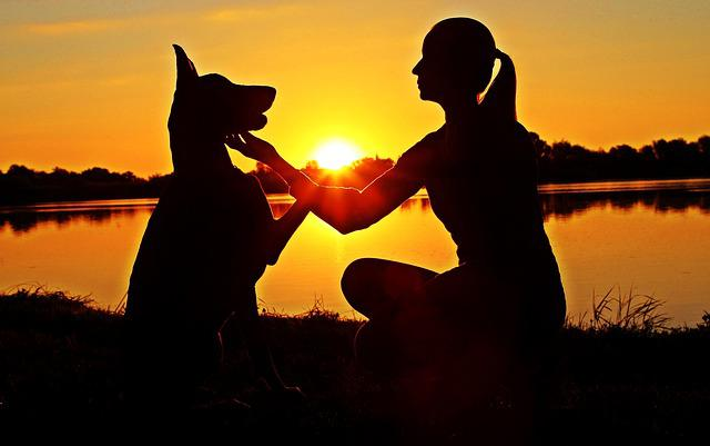 Doberman, Woman, Silhouette, Sunrise, Love, Touch