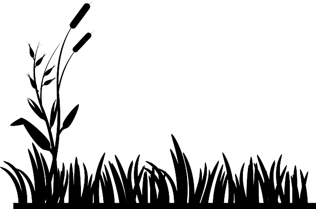 Cattails, Grass, Lawn, Nature, Silhouettes